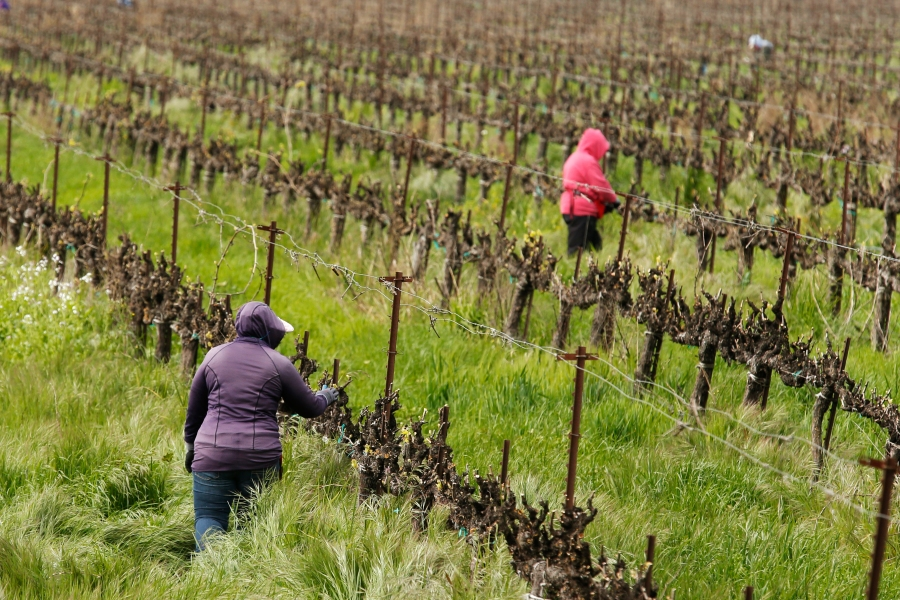 SACRAMENTO, Calif. (AP) — California farms are still working to supply food to much of the United States amid the coronavirus. But some farmworkers are anxious about the virus spreading among them. Many travel in groups to fields and say employers show no regard for social distancing.