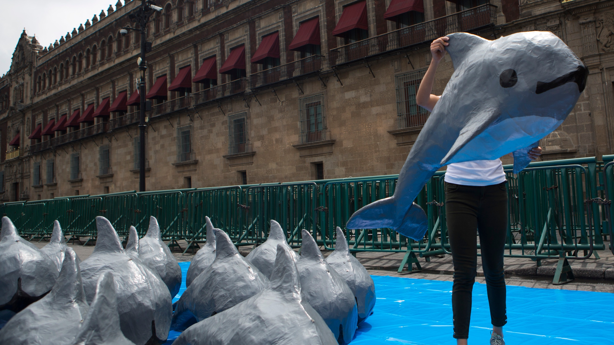 FILE - In this July 8, 2017 file photo, a young woman with the World Wildlife Fund carries a papier mache replica of the critically endangered porpoise known as the vaquita marina, during an event in front of the National Palace in Mexico City. The Mexican government announced Wednesday, July 14, 2021, that it is officially abandoned the policy of maintaining a fishing-free zone around the last 10 or so remaining vaquita marina. (AP Photo/Rebecca Blackwell, File)